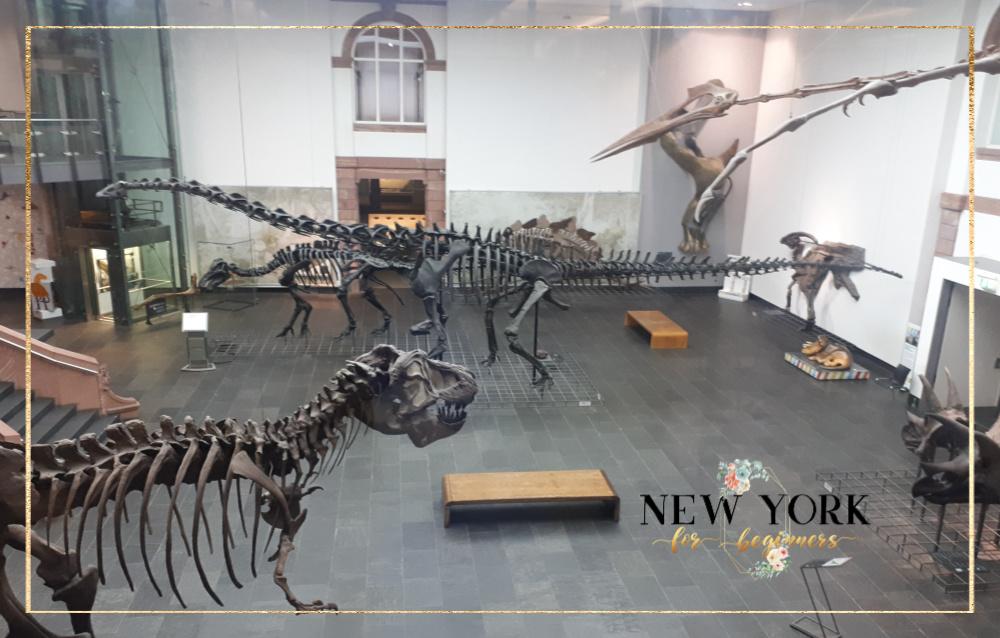 WowTrip dinosaur exhibit Senckenberg museum Frankfurt